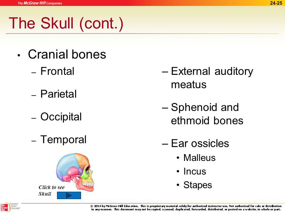 The Skull (cont.) Cranial bones Frontal Parietal Occipital Temporal