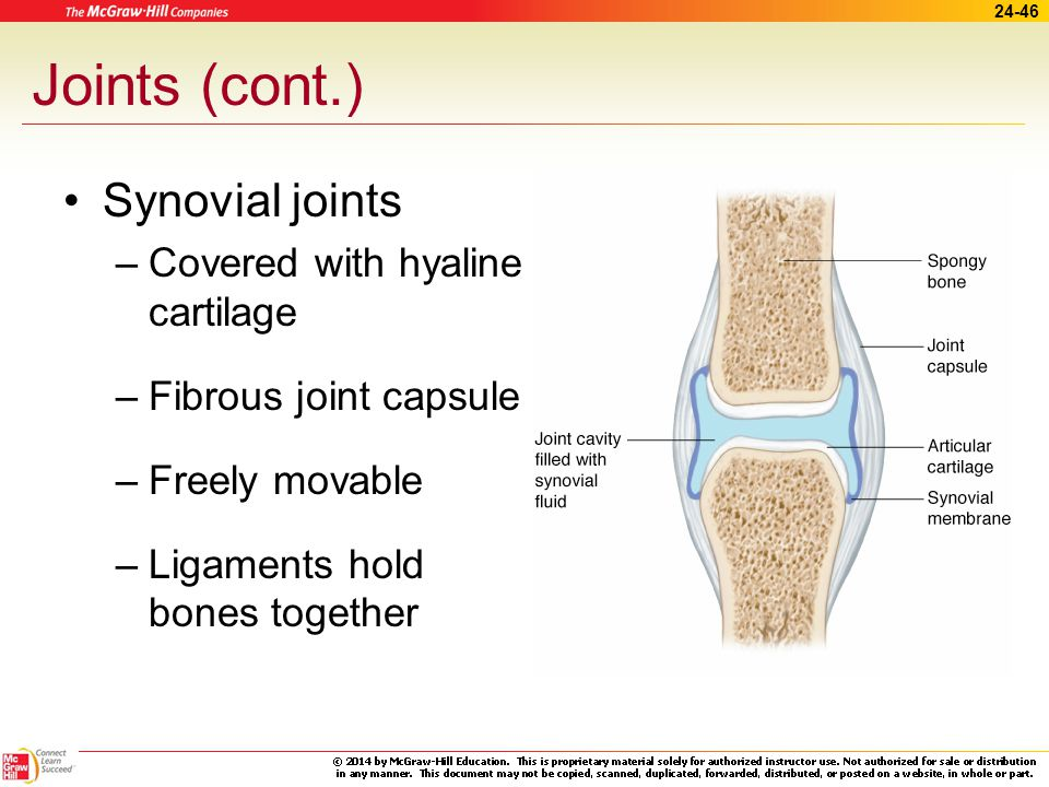Joints (cont.) Synovial joints Covered with hyaline cartilage