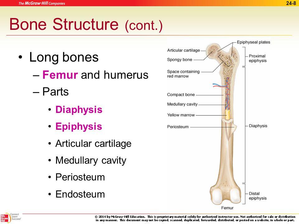 Bone Structure (cont.) Long bones Femur and humerus Parts Diaphysis