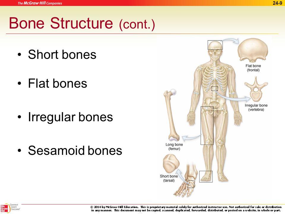 Bone Structure (cont.) Short bones Flat bones Irregular bones