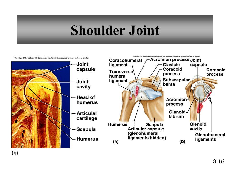 Shoulder Joint 8-16