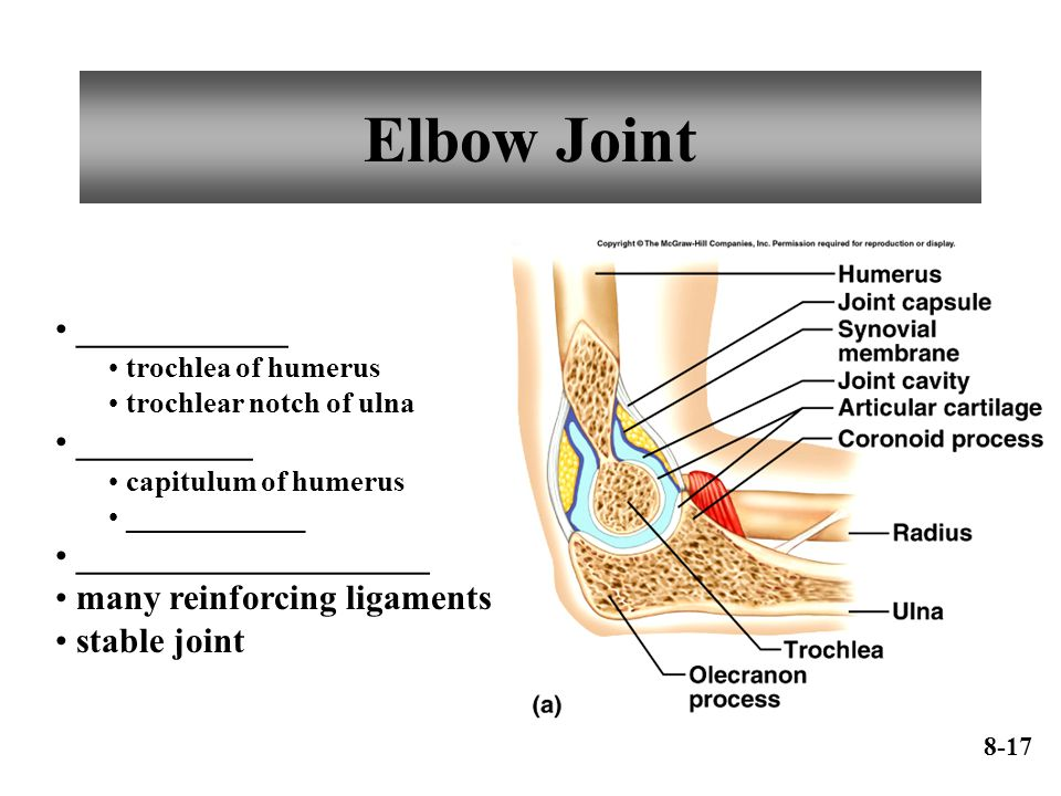 Elbow Joint ____________ __________ ____________________