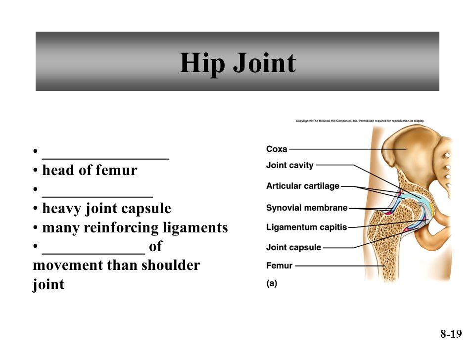Hip Joint ________________ head of femur ______________