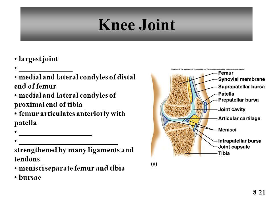 Knee Joint largest joint ______________