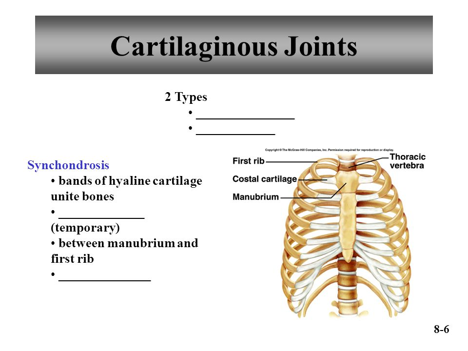 Cartilaginous Joints 2 Types _______________ ____________