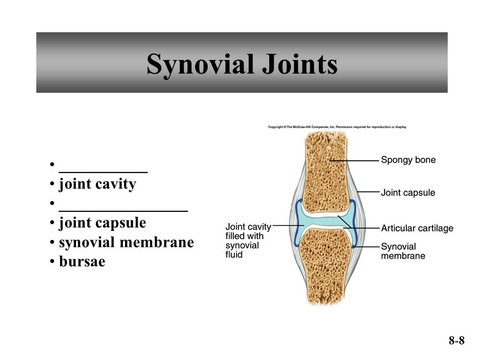 Synovial Joints ___________ joint cavity ________________