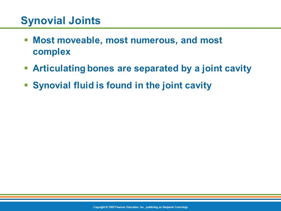 Synovial Joints Most moveable, most numerous, and most complex
