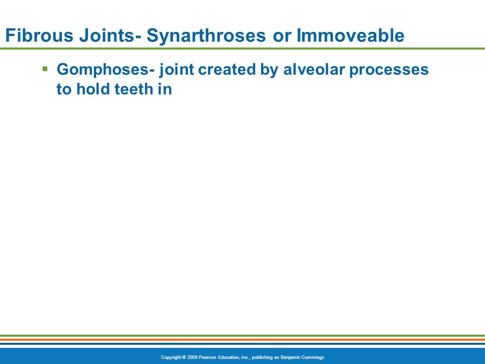 Fibrous Joints- Synarthroses or Immoveable