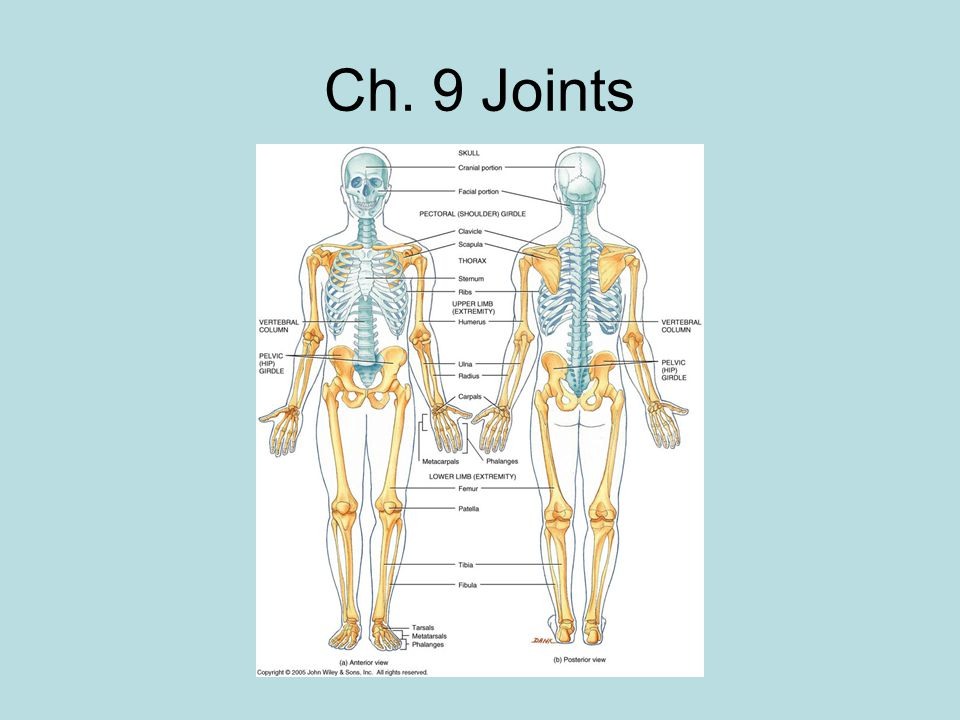 Ch. 9 Joints