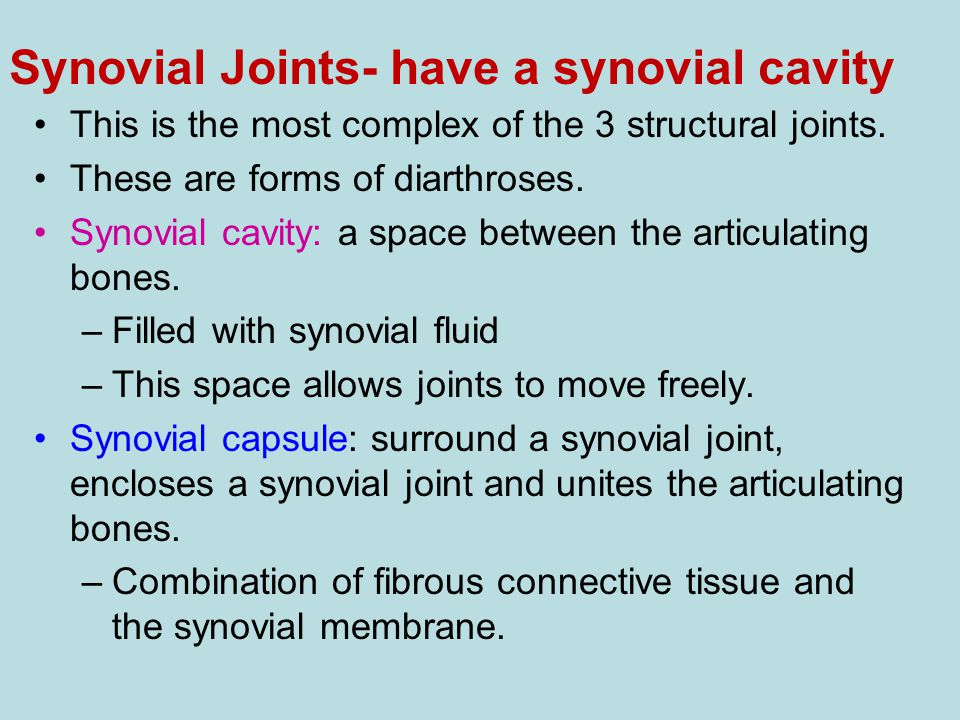 Synovial Joints- have a synovial cavity