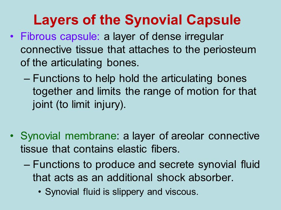 Layers of the Synovial Capsule