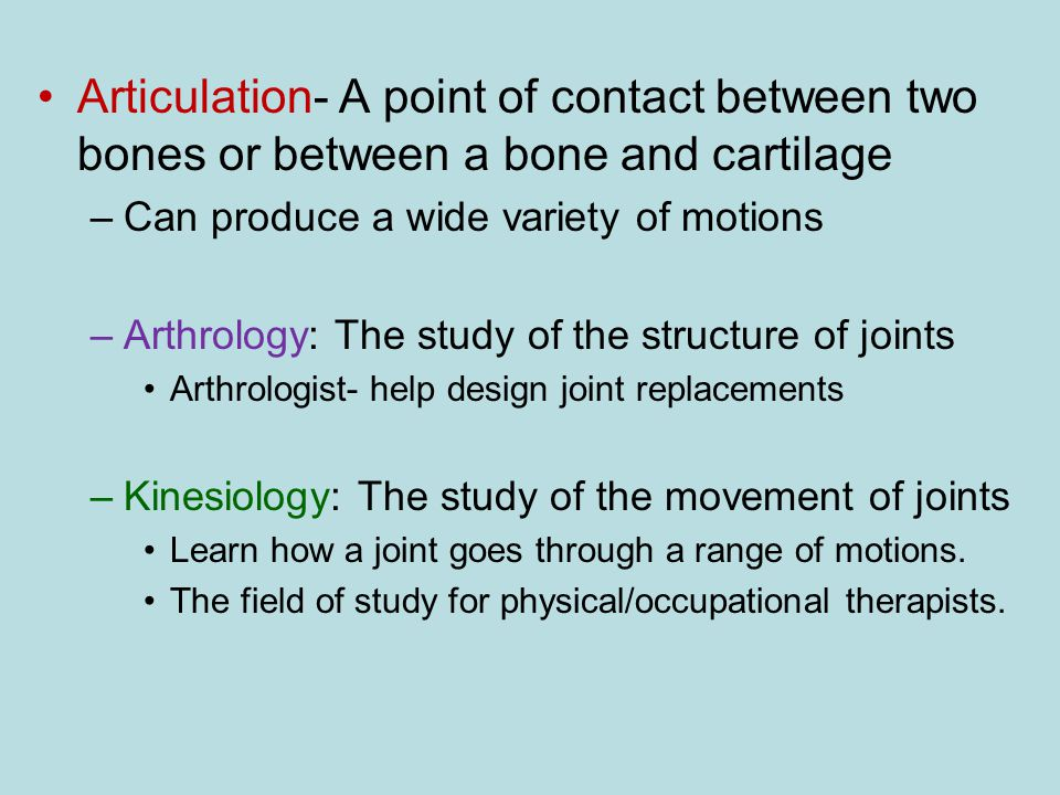 Articulation- A point of contact between two bones or between a bone and cartilage
