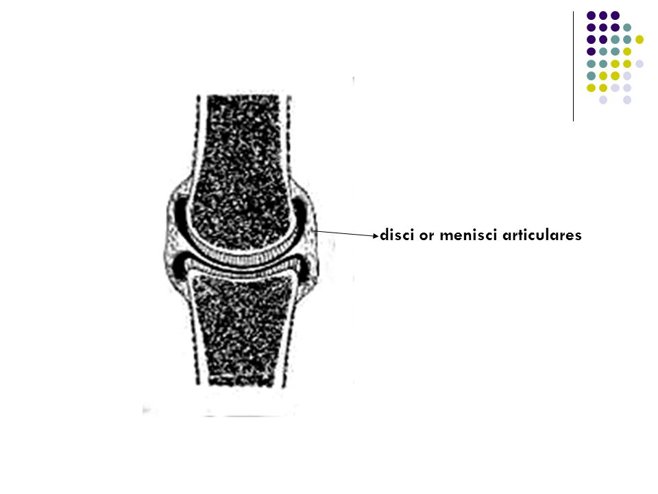 disci or menisci articulares