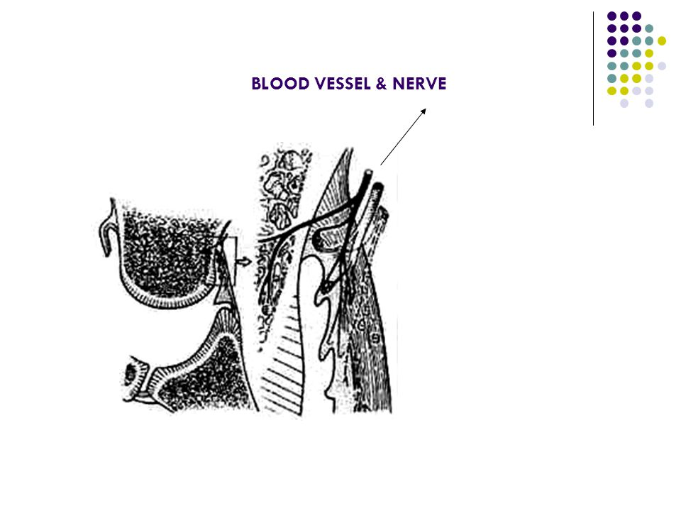 BLOOD VESSEL & NERVE
