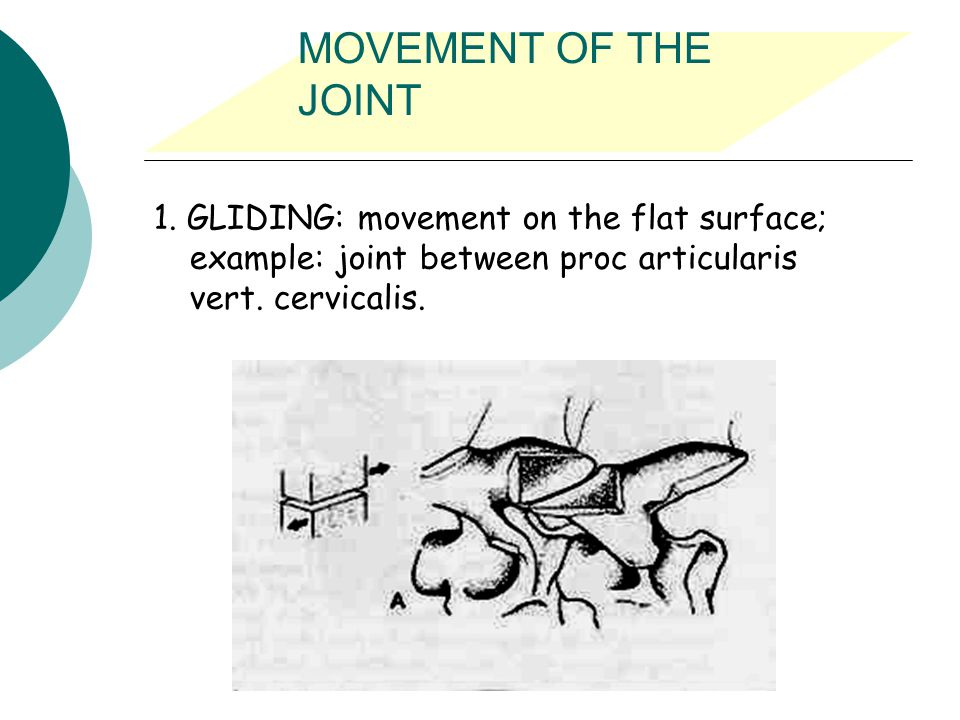 MOVEMENT OF THE JOINT 1.