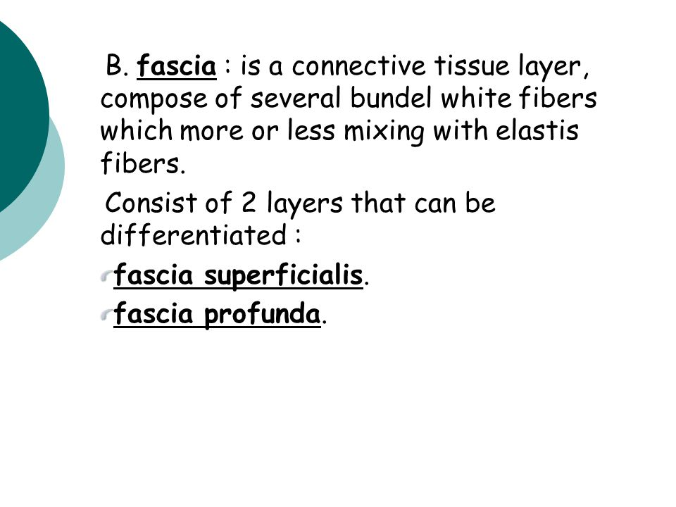 B. fascia : is a connective tissue layer, compose of several bundel white fibers which more or less mixing with elastis fibers.