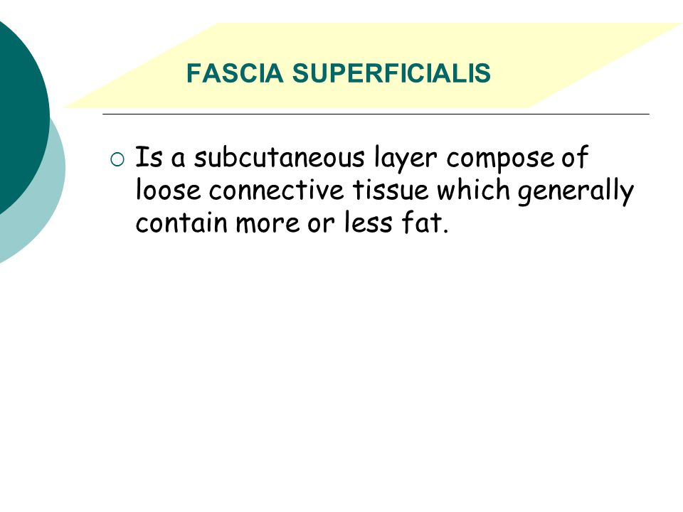 FASCIA SUPERFICIALIS Is a subcutaneous layer compose of loose connective tissue which generally contain more or less fat.