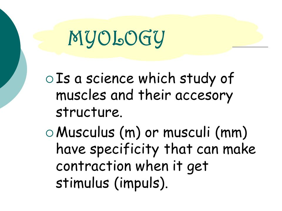MYOLOGY Is a science which study of muscles and their accesory structure.