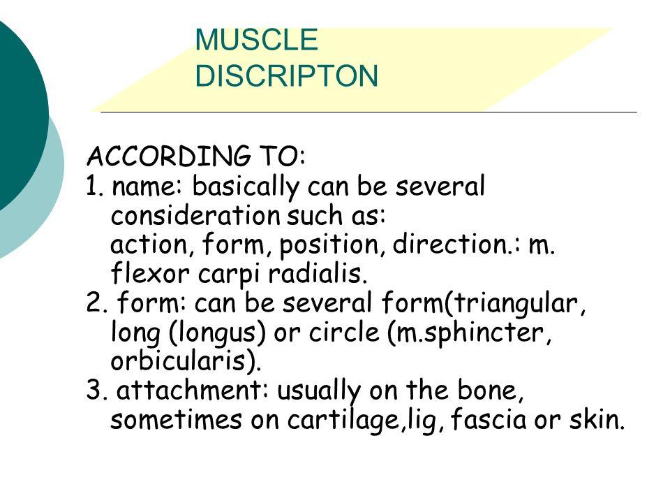 MUSCLE DISCRIPTON ACCORDING TO:
