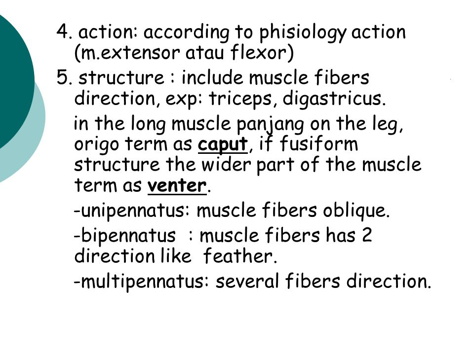 4. action: according to phisiology action (m.extensor atau flexor)
