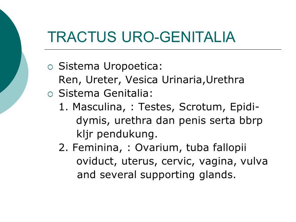 TRACTUS URO-GENITALIA