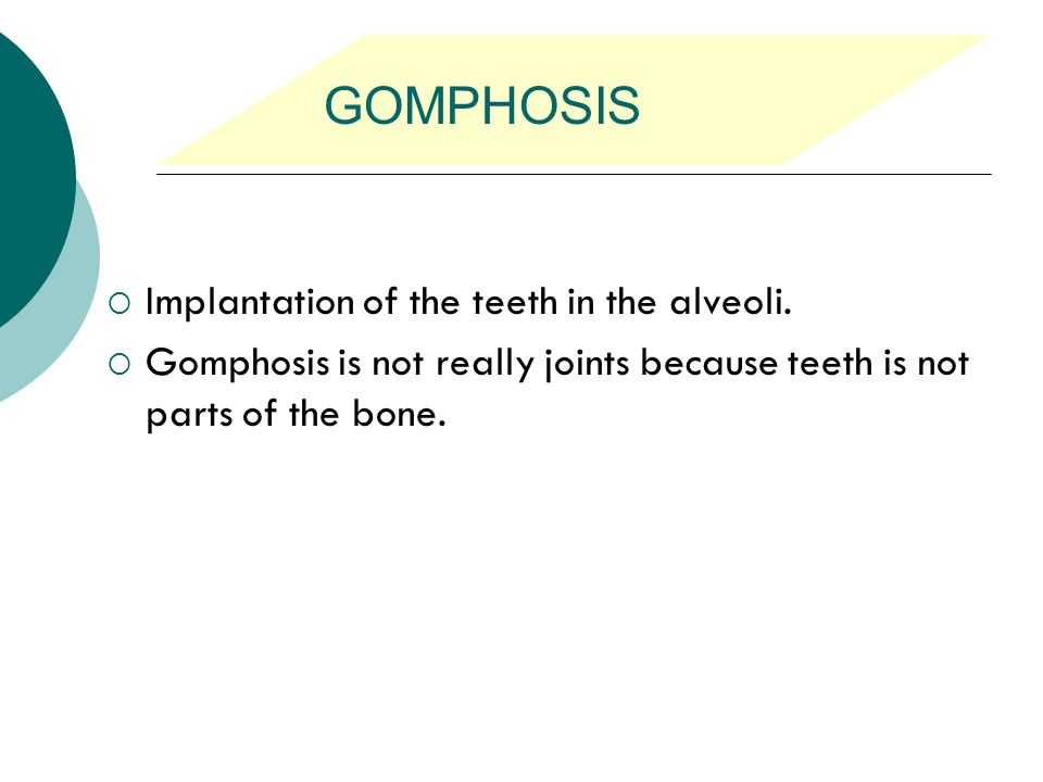 GOMPHOSIS Implantation of the teeth in the alveoli.