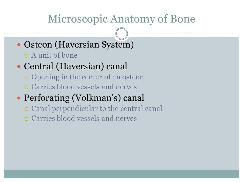 Microscopic Anatomy of Bone