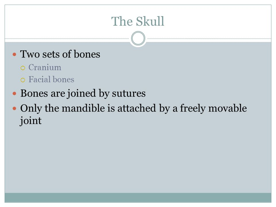 The Skull Two sets of bones Bones are joined by sutures