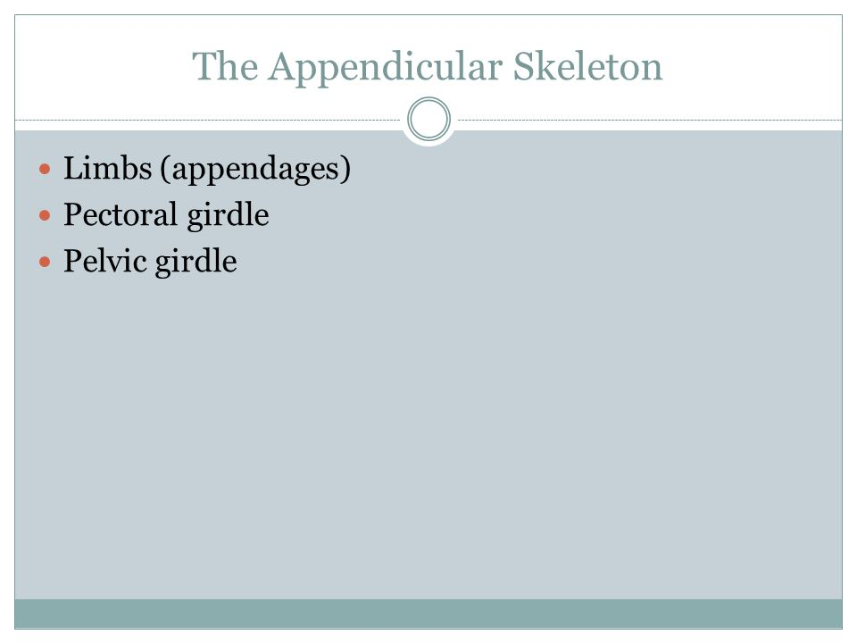 The Appendicular Skeleton