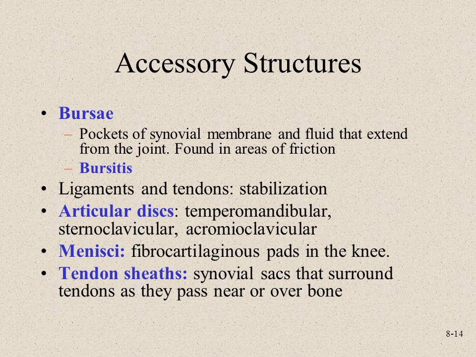 Accessory Structures Bursae Ligaments and tendons: stabilization