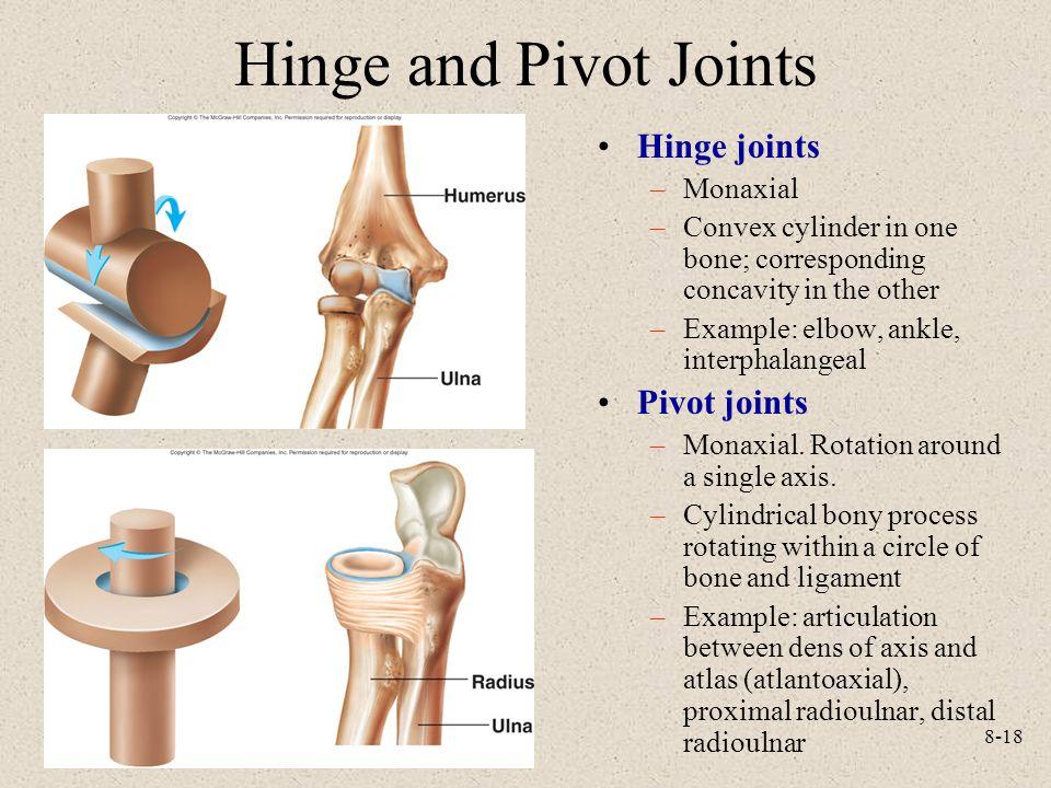 Hinge and Pivot Joints Hinge joints Pivot joints Monaxial