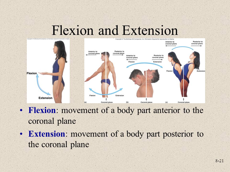 Flexion and Extension Flexion: movement of a body part anterior to the coronal plane.