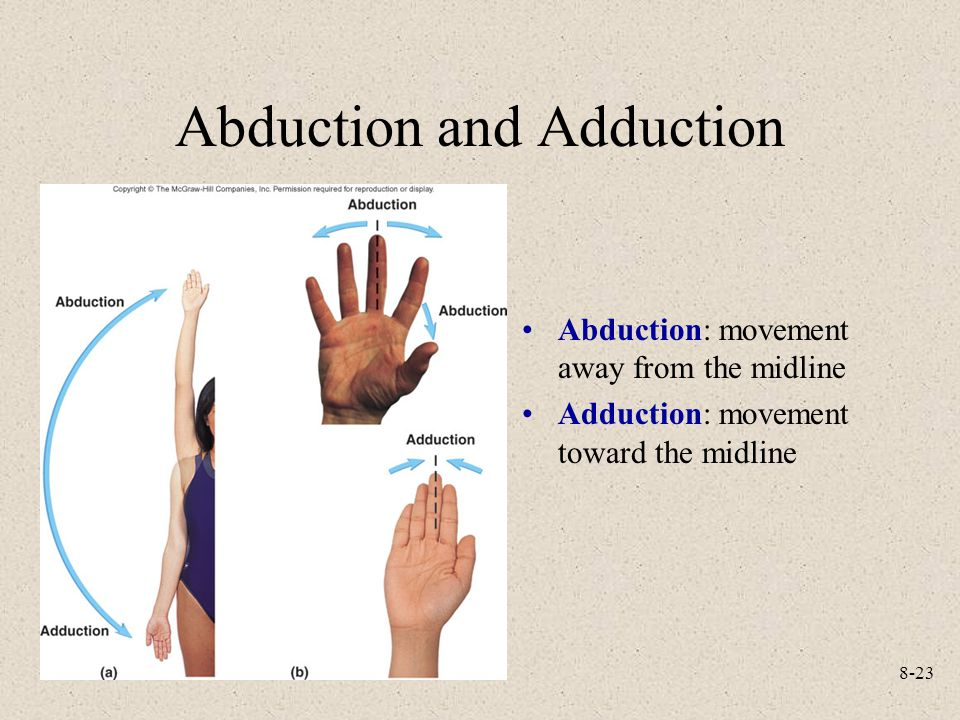 Abduction definition anatomy 7755653 - follow4more.info