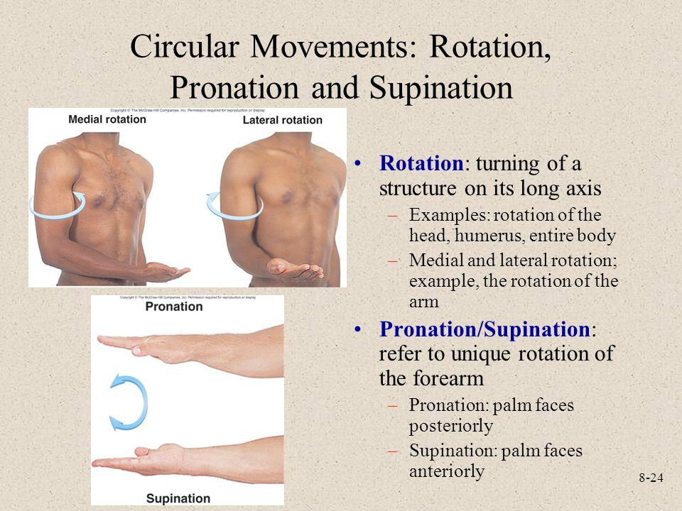 Circular Movements: Rotation, Pronation and Supination