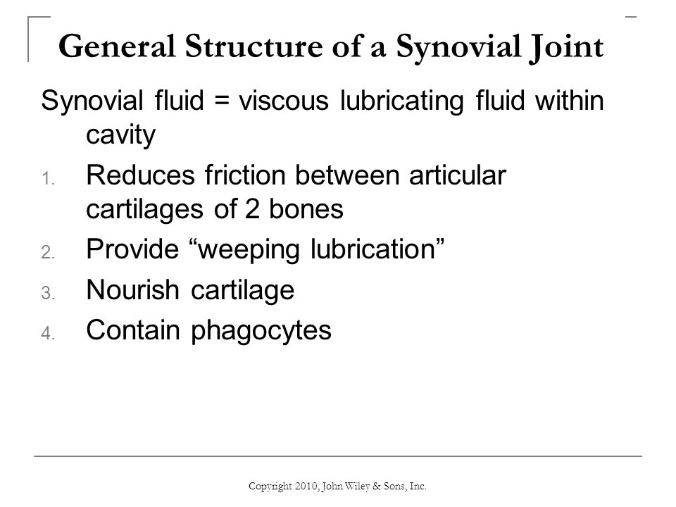 General Structure of a Synovial Joint