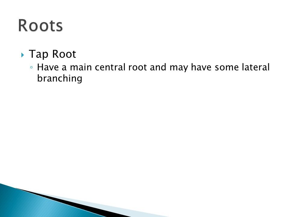 Roots Tap Root Have a main central root and may have some lateral branching