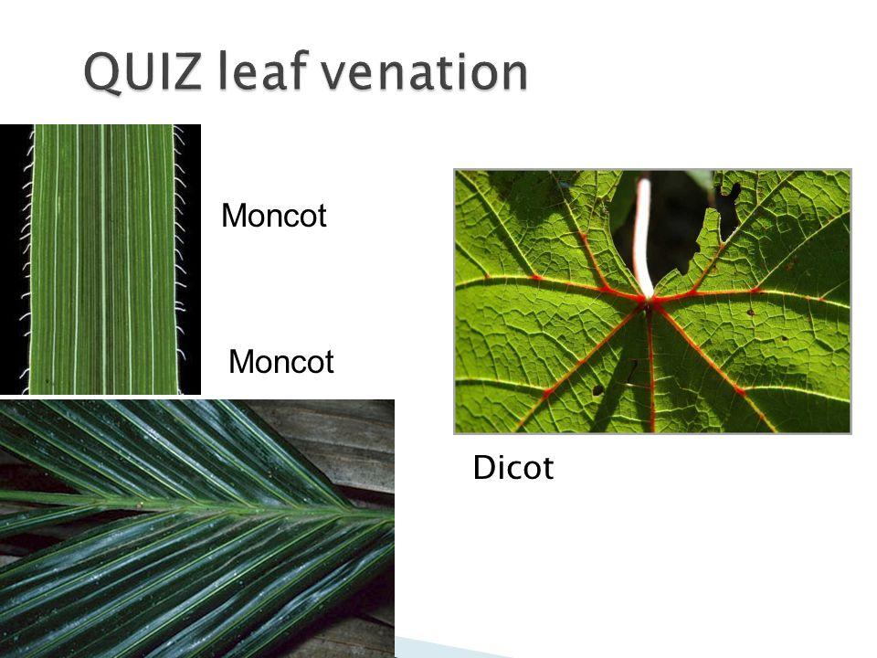 QUIZ leaf venation Moncot Moncot Dicot