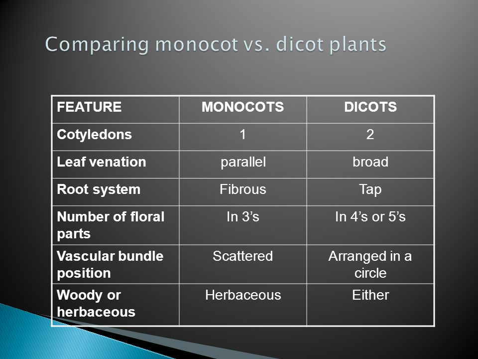 Comparing monocot vs. dicot plants