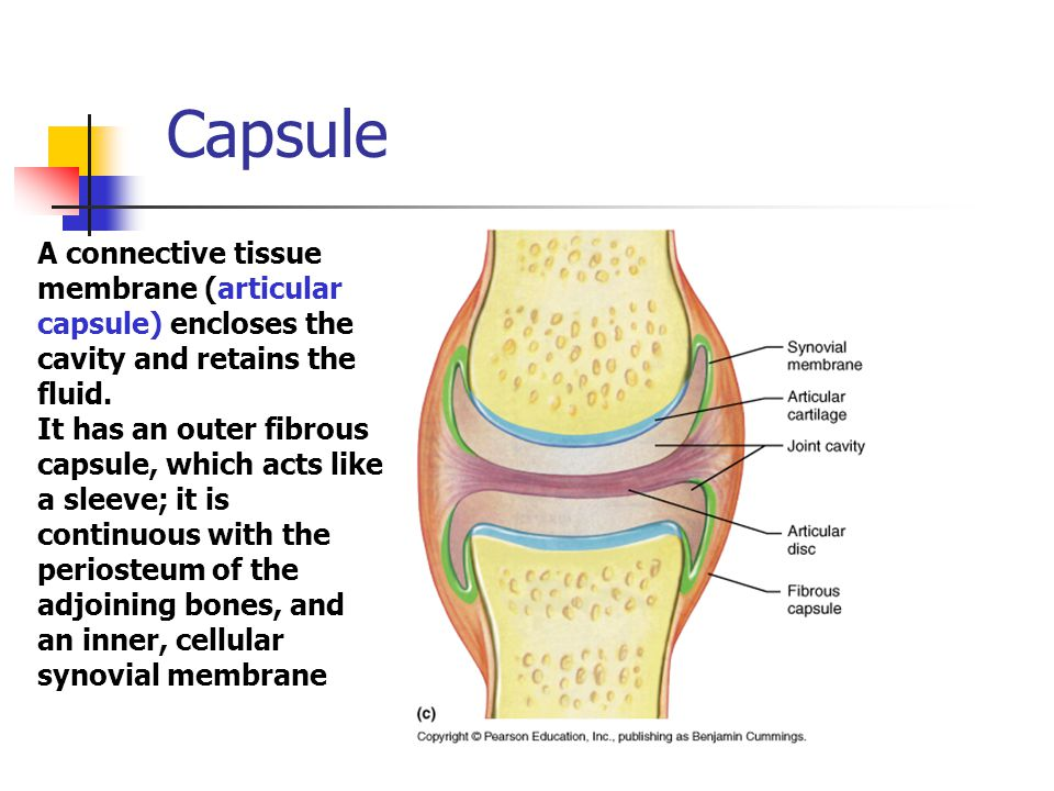 Capsule A connective tissue membrane (articular capsule) encloses the cavity and retains the fluid.