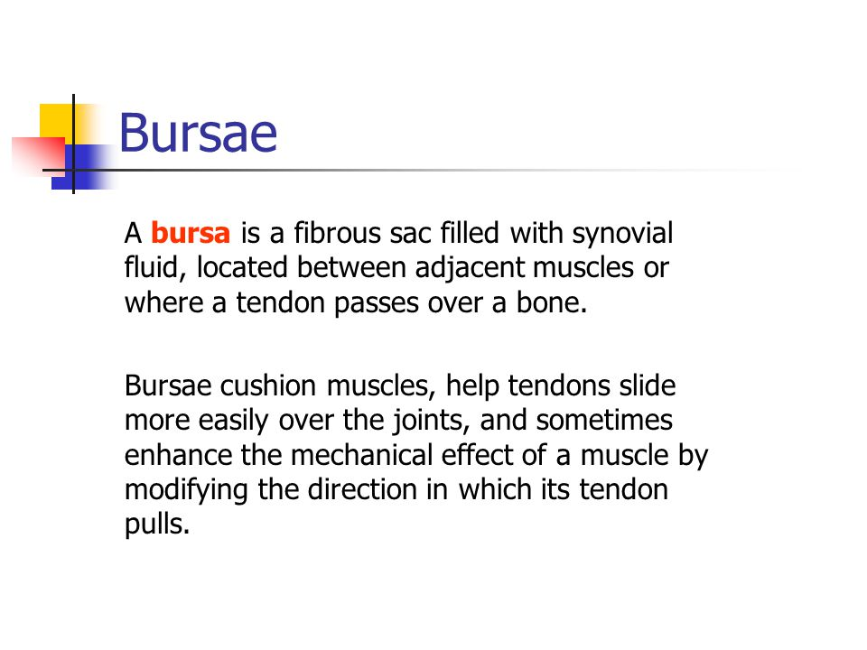 Bursae A bursa is a fibrous sac filled with synovial fluid, located between adjacent muscles or where a tendon passes over a bone.