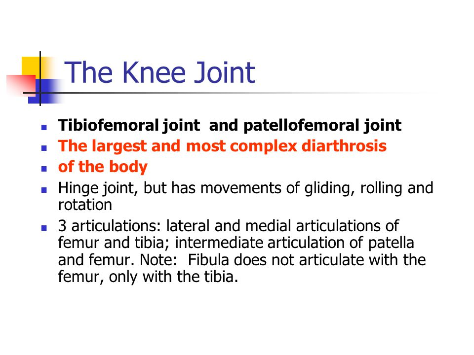 The Knee Joint Tibiofemoral joint and patellofemoral joint