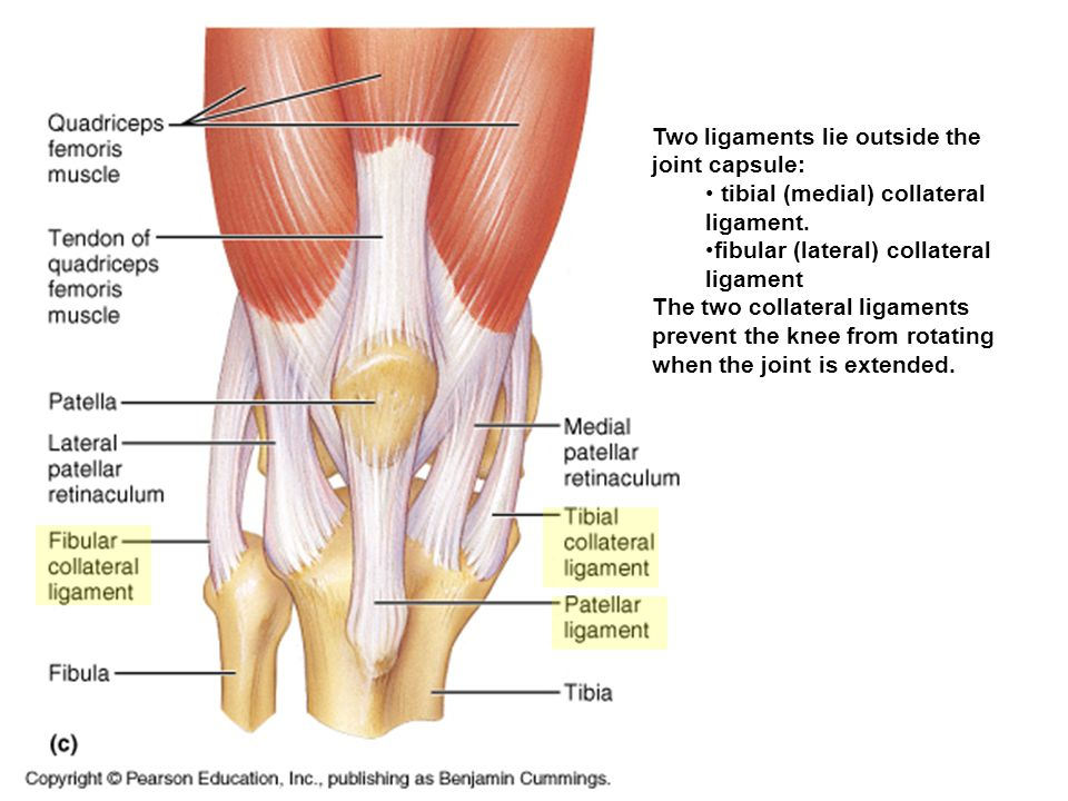 Two ligaments lie outside the joint capsule: