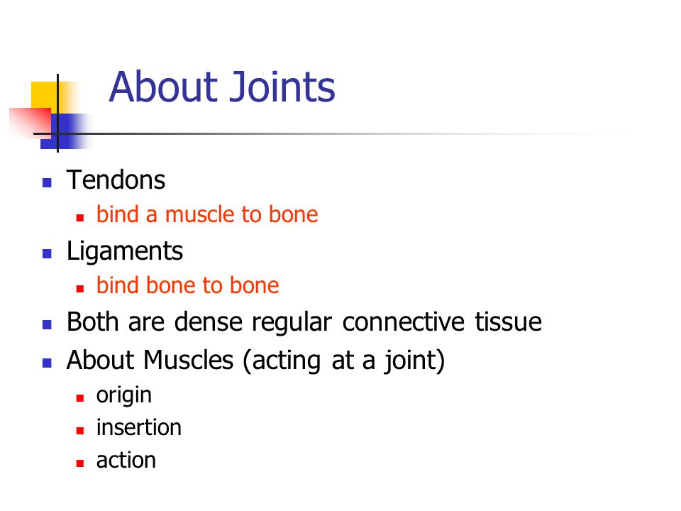 About Joints Tendons Ligaments