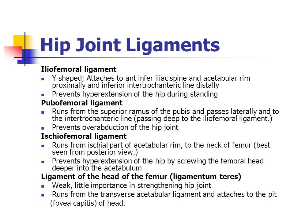 Hip Joint Ligaments Iliofemoral ligament