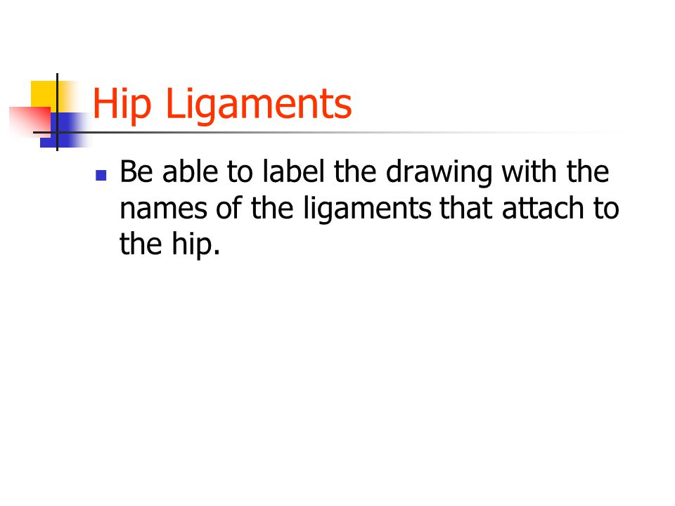 Hip Ligaments Be able to label the drawing with the names of the ligaments that attach to the hip.