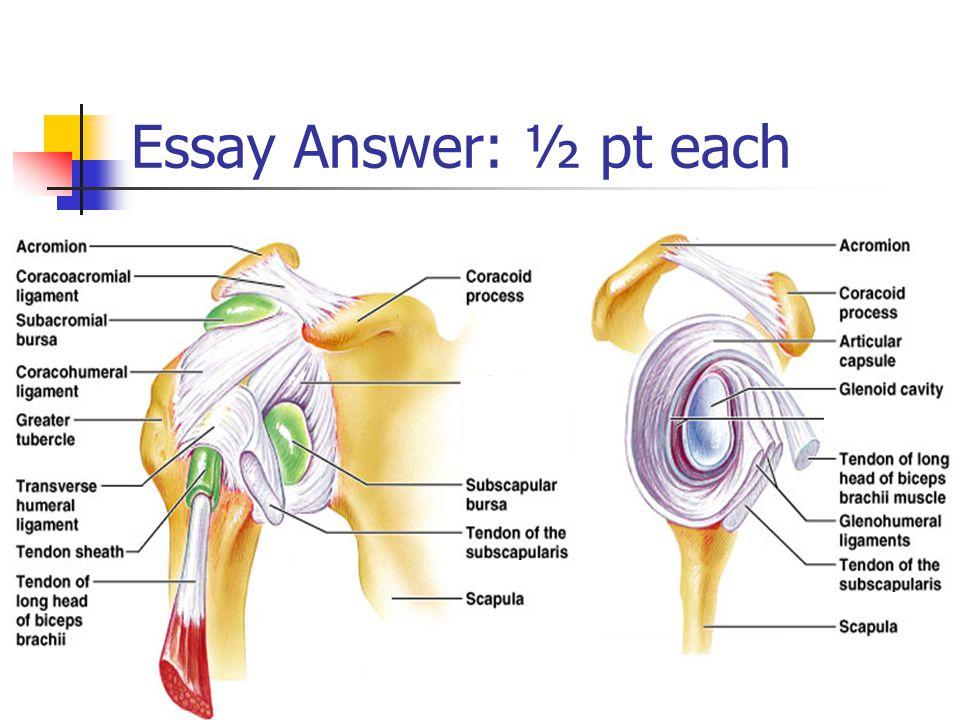 Essay Answer: ½ pt each