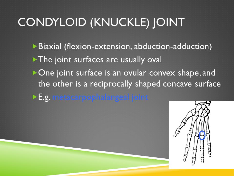 Condyloid (Knuckle) Joint