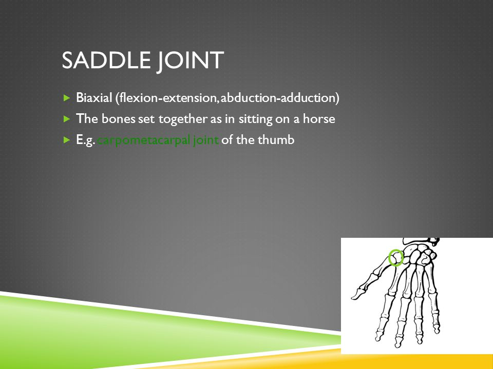 Saddle Joint Biaxial (flexion-extension, abduction-adduction)