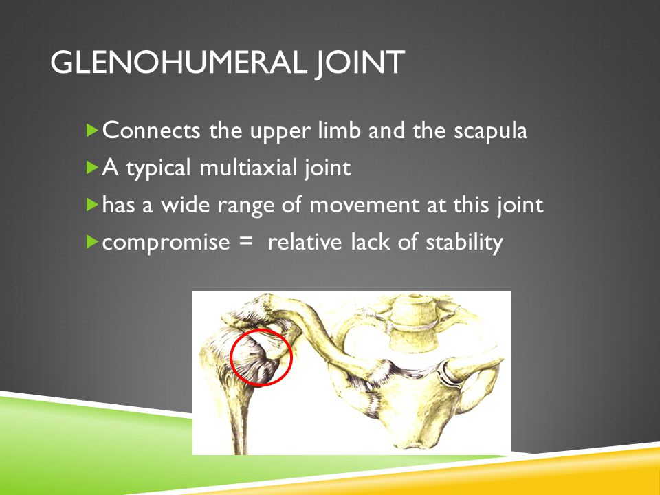 Glenohumeral Joint Connects the upper limb and the scapula