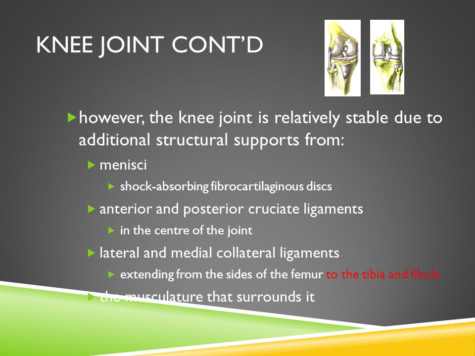 Knee Joint Cont'd however, the knee joint is relatively stable due to additional structural supports from: